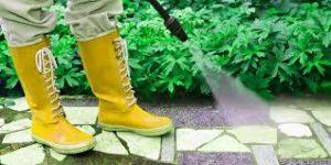 شركة رش مبيدات بجازان                                      300x150